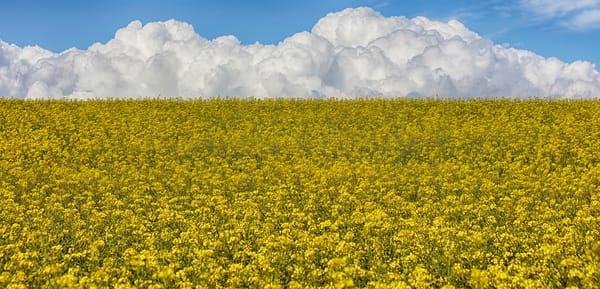 Balycotton Fields Of Gold Art | Michael Blanchard Inspirational Photography - Crossroads Gallery