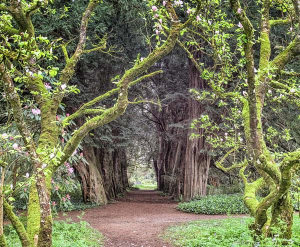 Lismore Castle Gardens Art | Michael Blanchard Inspirational Photography - Crossroads Gallery