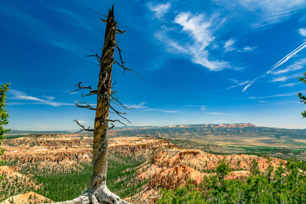 Fine Art Print of a dead tree on the edge of Bryce Point in Bryce Canyon National Park, Utah