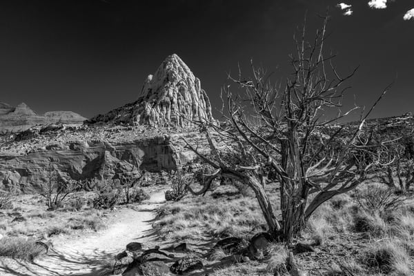 Fine Art Monochrome Print of a dead juniper tree in the harsh desert near Pectols Pyramid in Capitol Reef National Park, Utah