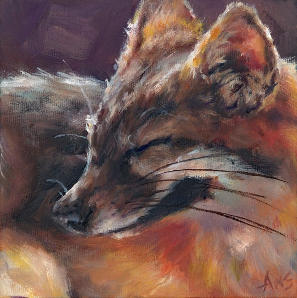 Fox in the sun. 6x6 canvas cube by Ans Taylor
