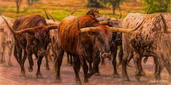 TX, texas, hill-country, longhorn, grazing, sunset, walking, bandera