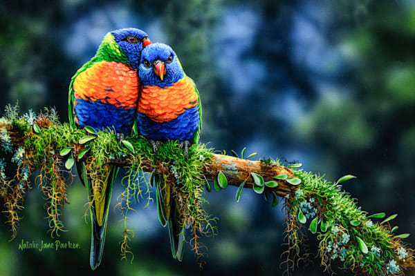 Morning Snuggles - Rainbow Lorikeet Natalie Jane Parker Australian Native Wildlife