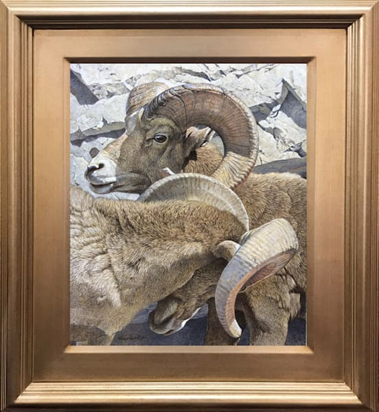 Big Horned Sheep Painting Original Art Tucson AZ