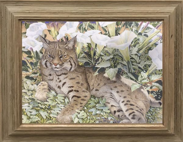 Original Framed Bobcat Painting  |  Tuscon Art Gallery