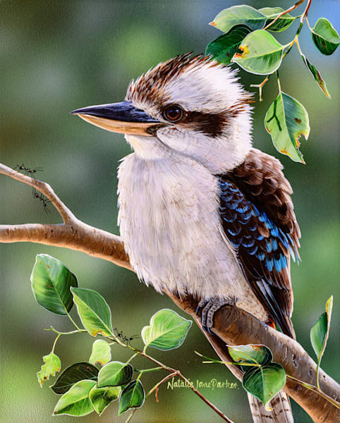 Out on a Limb - Laughing Kookaburra | Natalie Jane Parker | Australian Native Wildlife