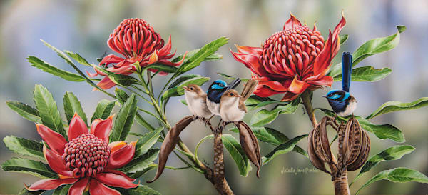 Waratah Picnic - Superb Fairy Wrens In Waratah Natalie | Jane Parker | Australian Native Wildlife