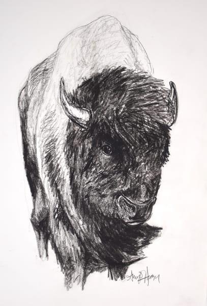 Buffalo 300dpi Art | Amy O'Hearn Art