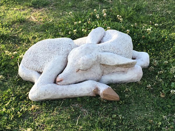 So sweet! Life-size concrete Sleeping Lamb ornamental yard animal by Louise Waller