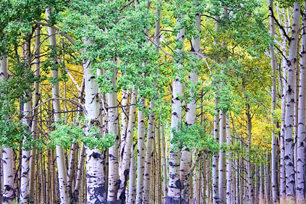 Telluride Aspen Mountain Photograph 6249 | Colorado Photography | Koral Martin Fine Art Photography