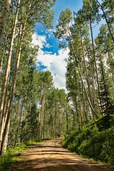 Aspen Photograph 2771 | Colorado Photography | Koral Martin Fine Art Photography