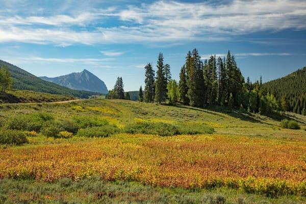 Golden Photograph 2310 | Colorado Photography | Koral Martin Fine Art Photography