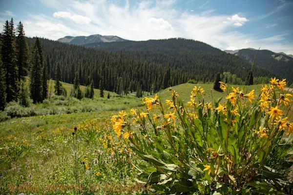 Mountain Gold Photograph 3807 | Colorado Photography | Koral Martin Fine Art Photography