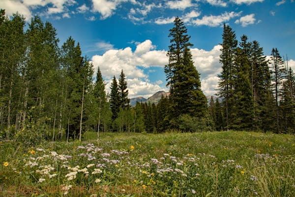 Mountains and Flowers Photograph 3934 Photograph 1 | Colorado Photography | Koral Martin Fine Art Photography