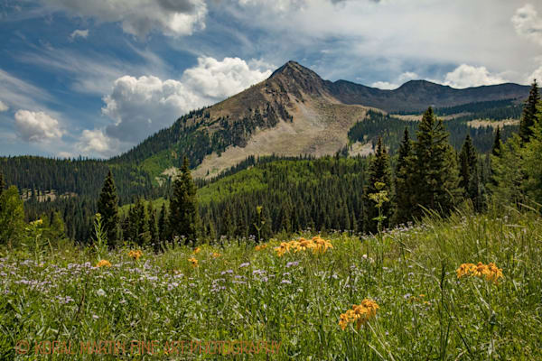 Mountains Flowers Photograph 3951 | Colorado Photography | Koral Martin Fine Art Photography