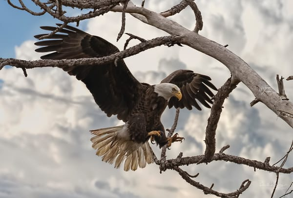Incoming - Perch of the Nest
