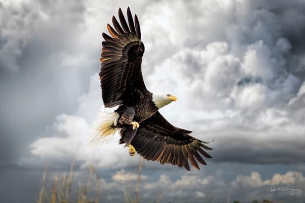 Spread of the Eagle