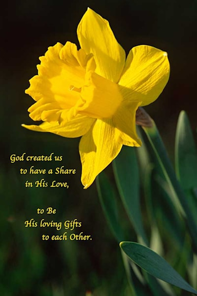 Sun-drenched daffodil - shop fine-art notecards | Closer Views