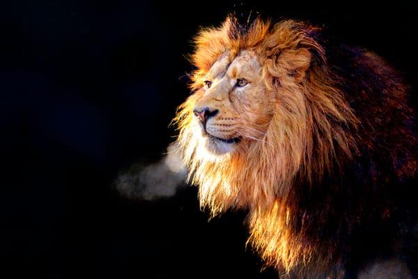 New Lion Photography Art | Cheng Yan Studio