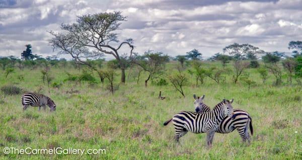 Zebra Art