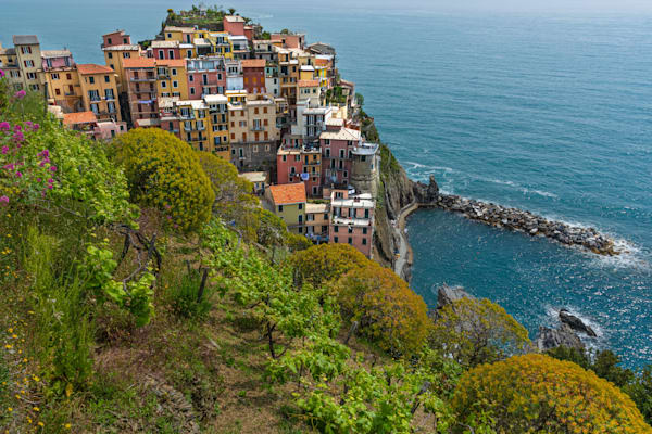 Vineyard above Manarola