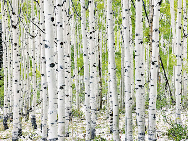 Aspen Family Photography Art | David Beavis Fine Art