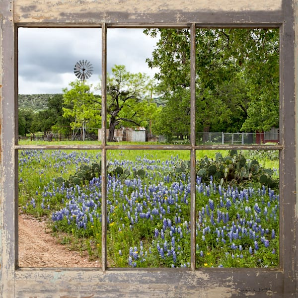 TX, hill-country, art, wildflower, bluebonnet, fence, windmill, willow-city, art