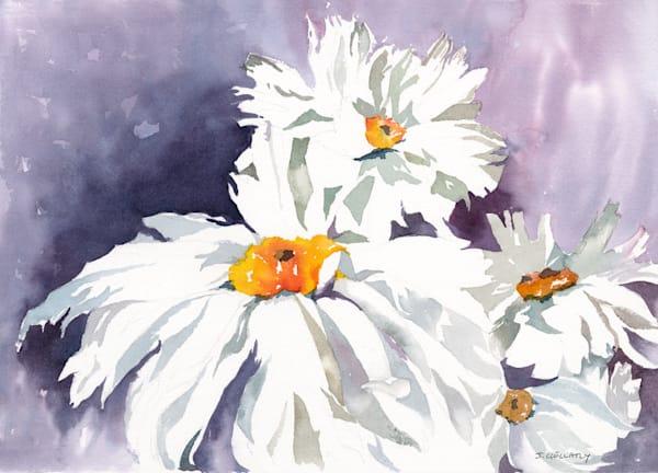 Jan Gellatly - Daisies