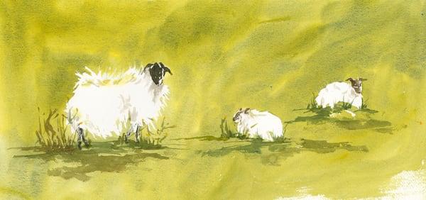 Jan Gellatly - Sheep