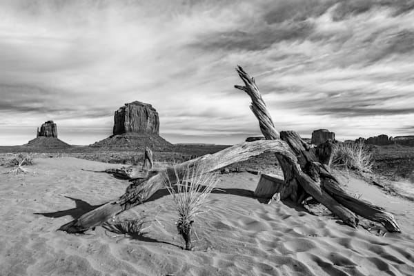 Monument Valley deadwood photography prints