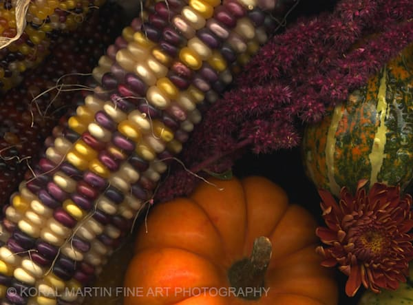 Fall collection  | Flower Photography | Koral Martin Fine Art Photography