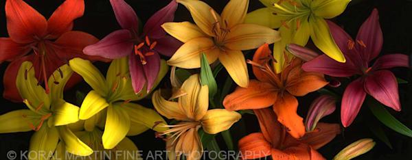 Lotsa Lilies  | Flower Photography | Koral Martin Fine Art Photography