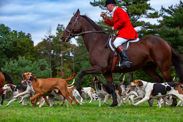 Sporting Life   Horse & Hounds