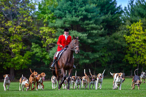 Jeff Adams Photography - Hunter Mount & Hounds