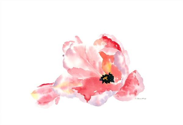 Jan Gellatly - Tulipa Rosa