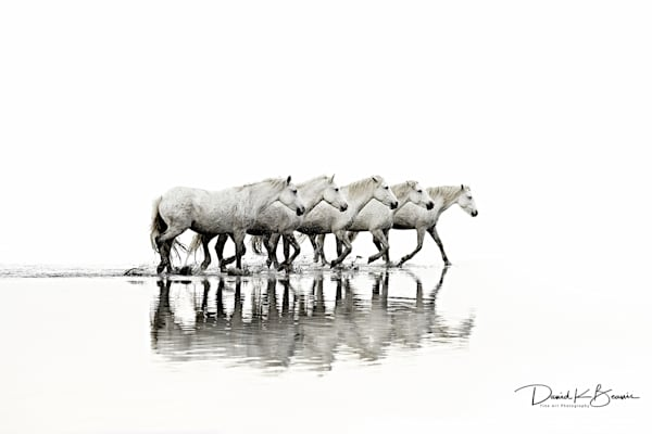 Take The Lead Photography Art | David Beavis Fine Art