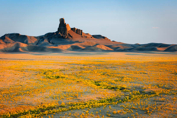 badlands superbloom in the utah desert