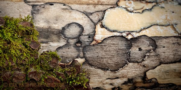 Bark and Moss Photograph 0712 | Macro Photography | Koral Martin Fine Art Photography