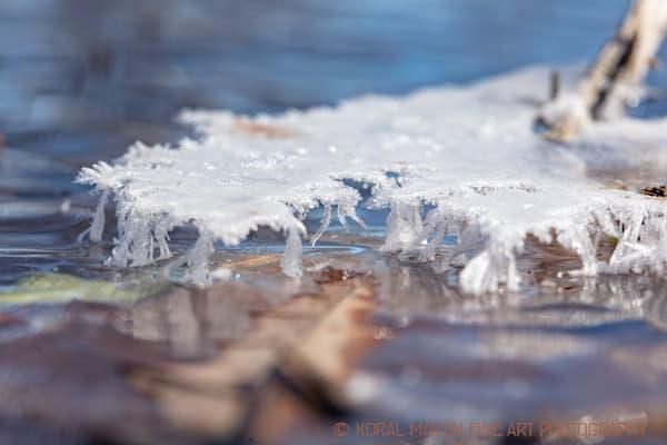 Ice Crystalshelf 7546 19    Photograph | Macro  Photography |  Koral Martin Fine Art Photography