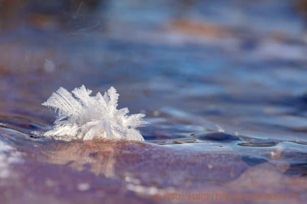Ice Crystals 7488 19    Photograph | Macro  Photography |  Koral Martin Fine Art Photography