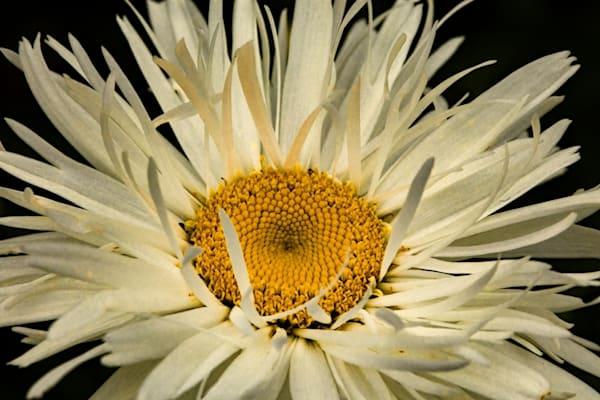 White flower Photograph 4258 SBG  | Flower Photography | Koral Martin Fine Art Photography