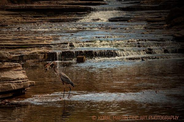 Blue Heron Photograph 4127  | Wildlife Photography | Koral Martin Fine Art Photography