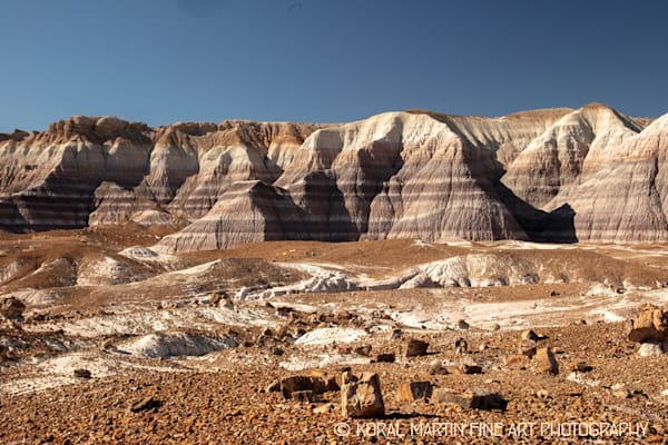 Petrified Forest Photograph 1510  | New Mexico Photography | Koral Martin Fine Art Photography