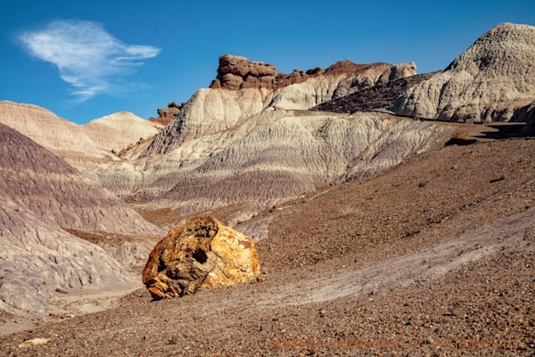 Petrified Forest Photograph 1457  | New Mexico Photography | Koral Martin Fine Art Photography