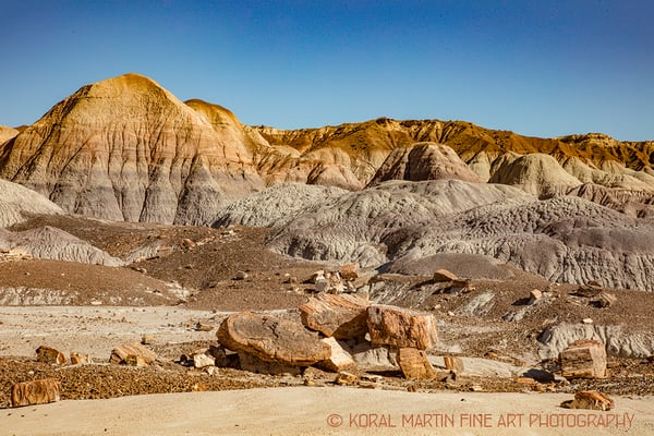 Petrified Forest Photograph 1488  | New Mexico Photography | Koral Martin Fine Art Photography