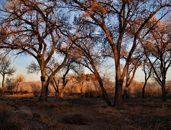 Rio Grande Golden Trees | New Mexico Photography | Koral Martin Fine Art Photography