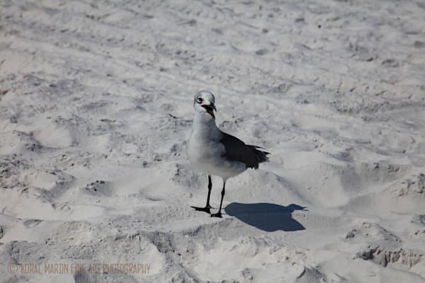 Bird on beach Photograph 1432 FL  | Florida Photography | Koral Martin Fine Art Photography