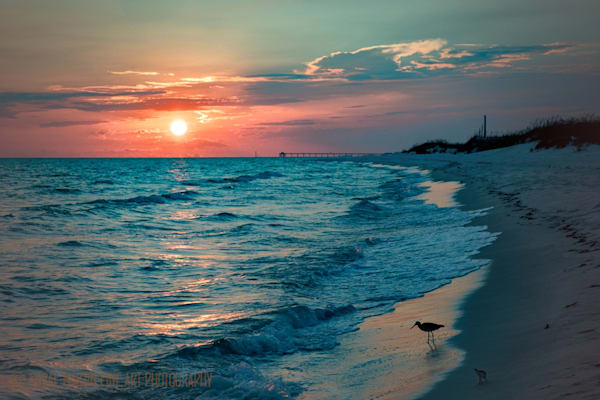 Sunset Bird on Beach Photograph 1006 FL  | Florida Photography | Koral Martin Fine Art Photography