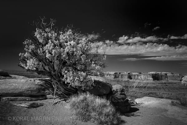 Infrared Photograph 5640 Black White Silver  | Infrared Photography | Koral Martin Fine Art Photography