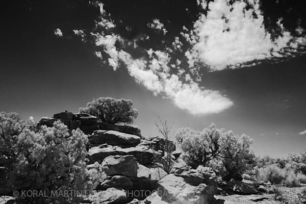 Infrared Photograph 5663clkwhite  | Infrared Photography | Koral Martin Fine Art Photography